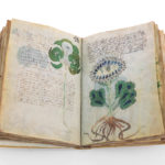 Voynich Manuscript – The 240 page script written in Unknown Language